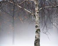 Árbol de Bich en niebla Imágenes de archivo libres de regalías