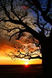 Árbol de Boab, Kimberly, Australia Imágenes de archivo libres de regalías