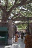 Árbol de Bodhi Foto de archivo libre de regalías