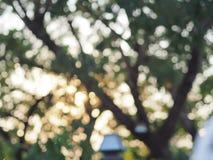 Árbol de Bokeh Imagen de archivo libre de regalías
