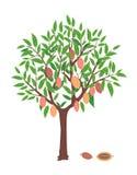 Árbol de cacao stock de ilustración