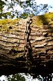árbol de cadena Imágenes de archivo libres de regalías
