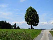 árbol de cal en el campo con el cielo azul Imágenes de archivo libres de regalías