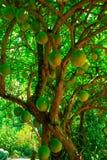 Árbol de calabaza fotos de archivo