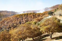 Árbol de castaña debajo del sol del otoño y de un cielo azul con las nubes Imagen de archivo