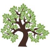 Árbol de castaña en blanco Imagen de archivo libre de regalías