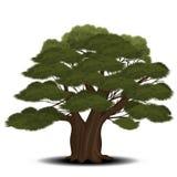 Árbol de cedro con las agujas verdes stock de ilustración
