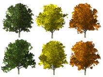 Árbol de ceniza aislado en blanco libre illustration