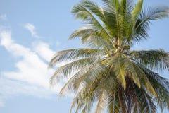 Árbol de coco bajo el cielo azul Fotos de archivo libres de regalías