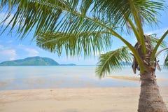 Árbol de coco bajo el cielo azul Fotografía de archivo