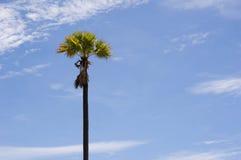 Árbol de coco con el cielo azul de las nubes Fotos de archivo libres de regalías