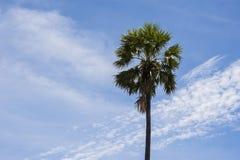 Árbol de coco con el cielo azul de las nubes Fotos de archivo