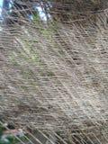 Árbol de coco con una hoja y un fondo nublado imágenes de archivo libres de regalías