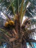 Árbol de coco con una hoja y un fondo nublado imagenes de archivo