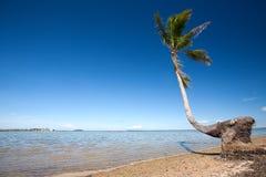 Árbol de coco de doblez por una playa tropical fotografía de archivo