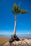 Árbol de coco de doblez por una playa tropical imagen de archivo