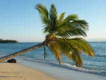 Árbol de coco de la isla imagenes de archivo