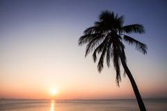 Árbol de coco de la puesta del sol Fotografía de archivo