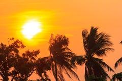 Árbol de coco de la silueta del cielo y de la nube de la puesta del sol Foto de archivo libre de regalías