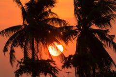 Árbol de coco de la silueta del cielo y de la nube de la puesta del sol Imagenes de archivo