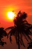 Árbol de coco de la silueta del cielo y de la nube de la puesta del sol Fotografía de archivo libre de regalías