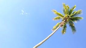 Árbol de coco debajo del cielo azul y mañana Sun con el área de espacio de la copia, lazo almacen de video