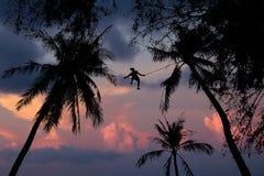 Árbol de coco del hombre que sube Foto de archivo