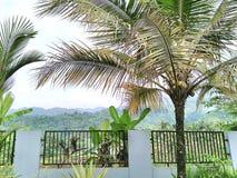 Árbol de coco en el chalet Fotografía de archivo