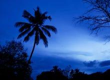 Árbol de coco en fondo oscuro del cielo Fotos de archivo