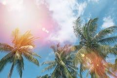 Árbol de coco en la costa tropical Imagen de archivo