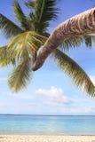 Árbol de coco en la playa Imagenes de archivo