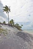 Árbol de coco en la playa de Oporto de Galinhas Imagen de archivo libre de regalías
