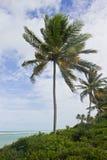 Árbol de coco en la playa de Oporto de Galinhas Fotos de archivo libres de regalías