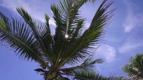 Árbol de coco en la playa en Koh Phangan, Suratthani, Tailandia almacen de metraje de vídeo