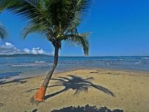 Árbol de coco en la playa de Puerto Viejo, Costa Rica fotografía de archivo