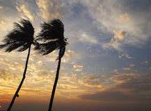 Árbol de coco en la puesta del sol del cielo Foto de archivo libre de regalías