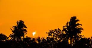 Árbol de coco ligero del amanecer fotografía de archivo