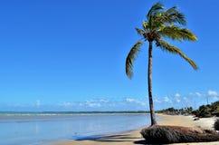 Árbol de coco por el mar Imagenes de archivo