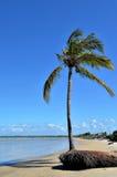 Árbol de coco por el mar Fotografía de archivo