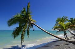 Árbol de coco que acompaña el borde de la marea fotos de archivo
