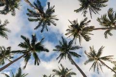 Árbol de coco que mira para arriba Foto de archivo libre de regalías