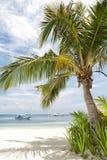 Árbol de coco tropical Fotografía de archivo libre de regalías