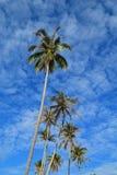 Árbol de coco y cielo azul Fotos de archivo