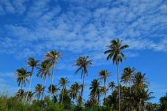 Árbol de coco y cielo azul Imagen de archivo libre de regalías