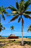 Árbol de coco y nave del abandone Imagen de archivo