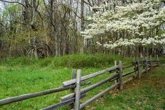 Árbol de cornejo y cerca de carril partido Fotos de archivo