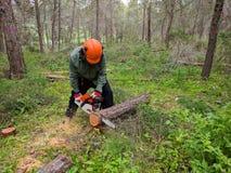 Árbol de corte del leñador con la motosierra Control de parásito de la silvicultura fotografía de archivo libre de regalías