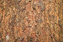 Árbol de corteza Fotos de archivo