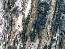Árbol de corteza Imagen de archivo libre de regalías