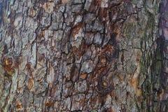 Árbol de corteza Imagen de archivo